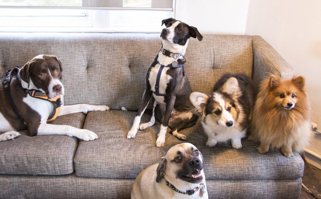 Influenster office_Dogs